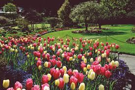 immagini di giardini fioriti il pittoresco arcobaleno di colori dei butchart gardens sull isola
