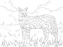 serval african wild cat coloring free printable coloring pages