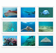 142 best wall art images on pinterest international paper sizes