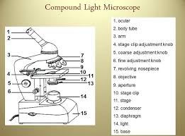 microscope worksheets free worksheets library download and print