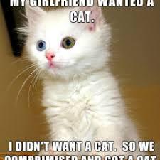 Colonel Meow Memes - cat meme archives page 125 of 982 cat planet cat planet