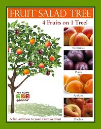 grow a fruit salad tree yes these are real they are trees that