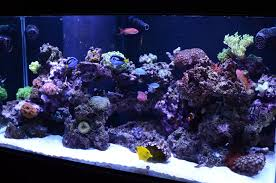 Saltwater Aquascaping Decoration Aquascaping Bring Nature Inside Home Ideas