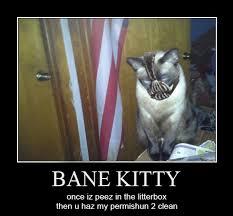 Bane Meme - bane kitty s litter batman know your meme