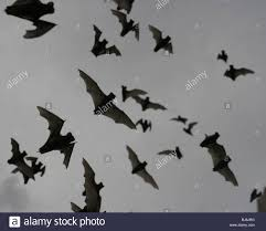 mexican free tailed bat emerging texas flock emerge colony fly
