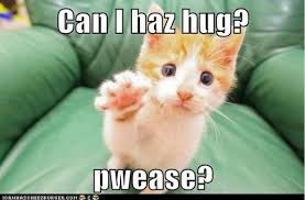 Cat Hug Meme - hug memes best funny hug pictures