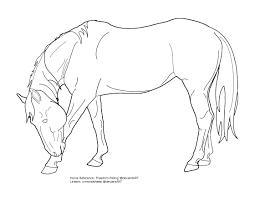 bowing horse inspiration pinterest horse and warmblood horses
