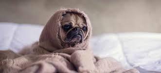 comment empecher mon chien de monter sur le canapé lits divans et sofas éviter les conflits avec votre chien