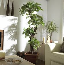 Japanese House Plants Shop Amazon Com Artificial Trees U0026 Shrubs