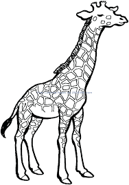 giraffe coloring pages printable free download pictures giraffes
