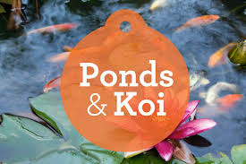 ornamental fish ponds waterfalls and streams petcha