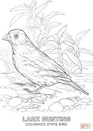 colorado state bird coloring page free printable coloring pages