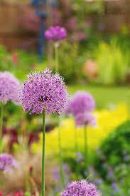 June Flowers - what u0027s in bloom in june leavesnbloom gardening u0026 photography