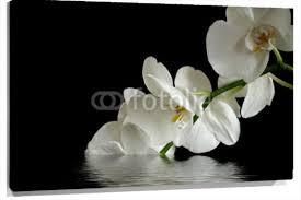 imagenes blancas en fondo negro cuadro orquideas blancas en fondo negro 100 a medida