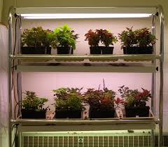 growing plants indoors with artificial light starting seeds indoors yard and garden garden university of
