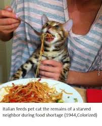 Funny Italian Memes - italy memes best collection of funny italy pictures