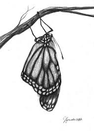 monarch butterfly drawings for sale clip library