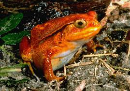 pictures cute and colorful frog images amphibians