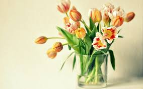 flower vase images and wallpapers download