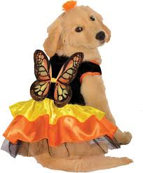 Small Puppy Halloween Costumes 188 Disfraces Mascotas Images Costumes