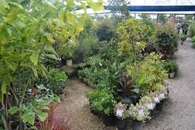 plant factory outlet plant factory outlet visit our nursery at
