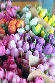 New Colors Best 25 Spring Flowers Ideas On Pinterest Spring Flower