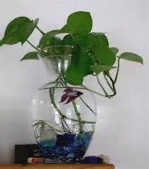 Betta Fish Vase With Bamboo Betta Vase Plants Creating A Beautiful Betta Fish Vase With A