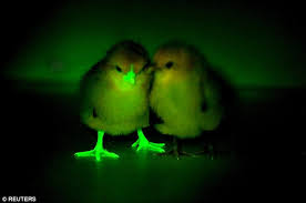 uv light for birds have been bred with fluorescent beaks and feet daily mail