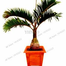 popular ornamental plants tree tropical seed buy cheap ornamental