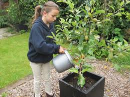 watering your fruit trees