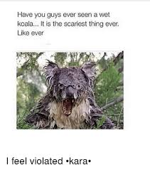 I Feel Violated Meme - have you guys ever seen a wet koala it is the scariest thing ever
