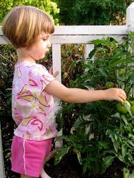 indoor gardening with kids the activityhero blog