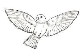 draw birds draw step step