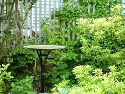 blogging away whimsical garden