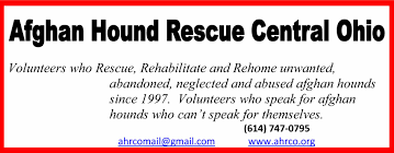 afghan hounds for adoption afghan hound rescue central ohio u2013 phone 614 747 0795 email