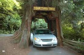 Chandelier Drive Through Tree Destination Drive Through Trees Oh Ranger