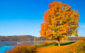 tree and lake free desktop wallpapers for widescreen hd and mobile