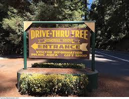 Chandelier Drive Through Tree Chandelier Tree Famous Redwoods