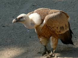 Seeking Vulture Vulture Cast Your Net