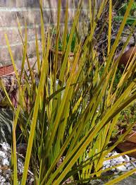 ornamental grass 12 evergreen plant collection plants to plant