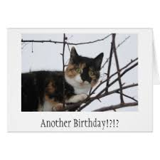 funny cat birthday note cards funny cat birthday notecards