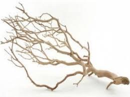 decorative tree branches decorative manzanita branches for crafts and decor