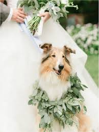 dog wedding dress 14 awesome ways to include your dog on your big day barkpost
