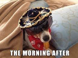 Morning After Meme - the morning after a very fun weekend talent hounds