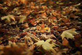 how to keep leaves out of your window well salt lake