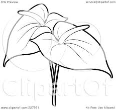 calla lily color pages calla lily flower grayscale coloring page