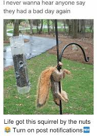 Squirrel Nuts Meme - i never wanna hear anyone say they had a bad day again life got this