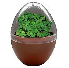customer reviews of good luck egg micro terrarium by dunecraft