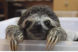how much do you about sloths