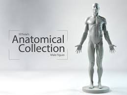 Human Figure Anatomy Best 25 Male Figure Ideas On Pinterest Anatomy Drawing Figure